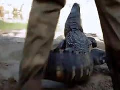 Hot badass girls visited cranky crocs and enjoying it